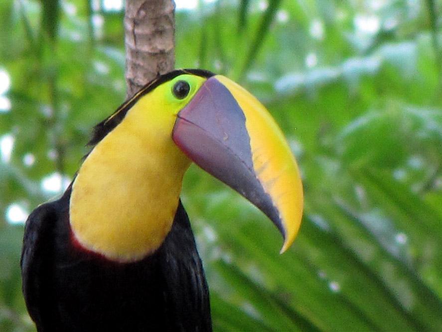 Фото национальный парк Карара Коста-Рика
