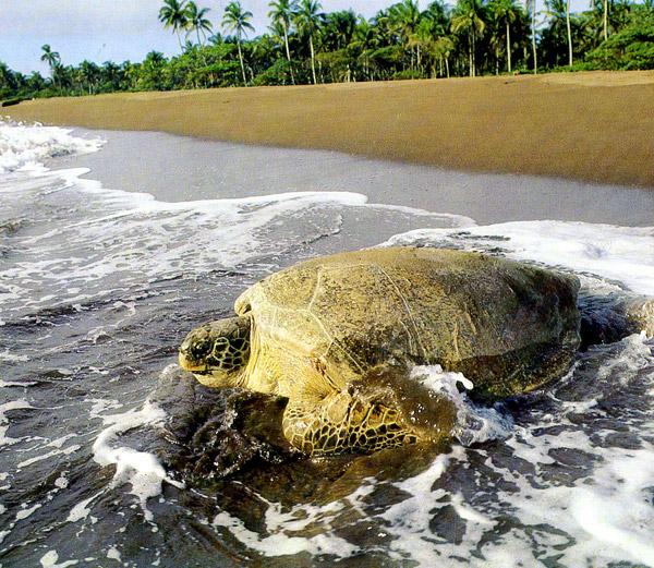 Фото национальный парк Тортугеро Коста-Рика