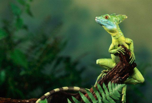 Фото национальный парк Санта Роса Коста-Рика