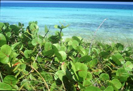 Фото курорта Кайо Коко и Кайо Гильермо Куба - Cayo Coco
