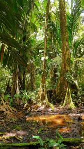 Фото страны Коста-Рика