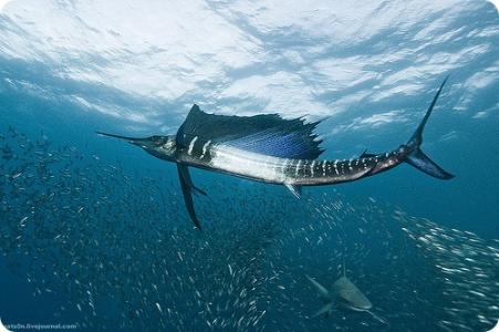 Рыбалка - Фотографии